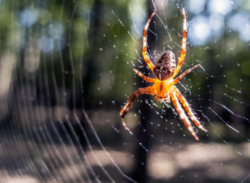 Fobia tem cura? Aranha em sua teia.